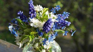 花瓶に生けたムスカリ