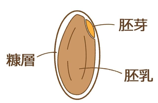 米ぬかの説明イラスト