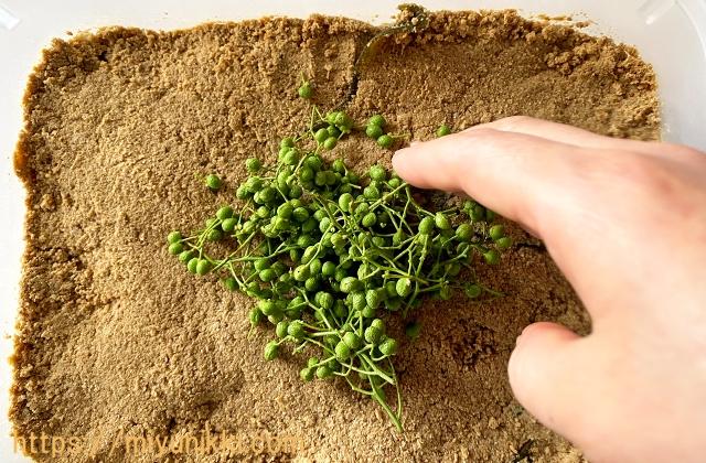 ぬか床に山椒の実を混ぜる様子