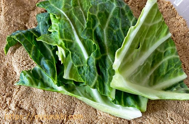 捨て漬け用野菜・キャベツの葉